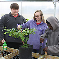 Horticulture From left, John Isaac Williams, Lauren Murphy and Dearius Hughes. The class is taught by Chad Cooper.