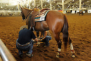 Youth from around the world converged on Oklahoma City for the American Quarter Horse Assocation (AQHA) Youth World horse show at the Oklahoma City Fairgrounds.  Each participant had to qualify either at the state or national level to compete.  All contestants under age 18 and horse must be owned by them or a direct family member.