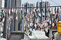 Fish drying on the deck of a fishing boat at Aberdeen floating village, Hong Kong, Hong Kong, August 2008   Photo: Peter Llewellyn