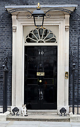 Larry the cat on the doorstep of 10 Downing Street, London, as Theresa May's future as Prime Minister and leader of the Conservatives was being openly questioned after her decision to hold a snap election disastrously backfired.