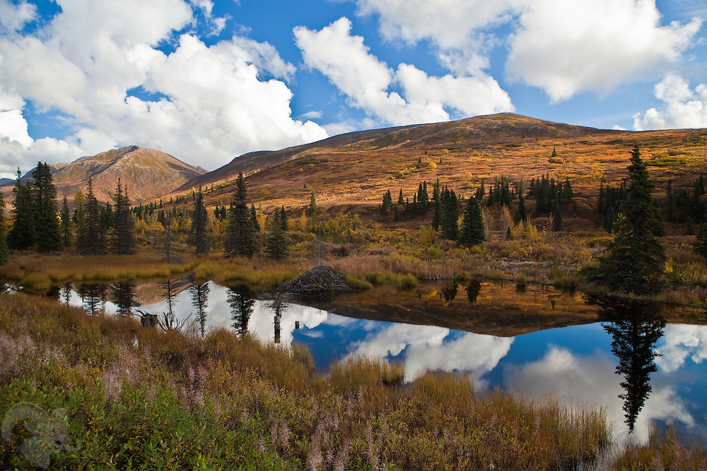 A beaver pond reflects the fall colors and sky in this scene from the western end of the Hatcher Pass Road in Alaska.