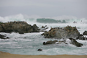 CALIFORNIA COAST - JANUARY 2:  2006 Birds sit on rocks and ignore the danger as waves crash on the beach in the Monterey Peninsula during New Year's vacation driving along the California Coast on January 2, 2006. ©Paul Anthony Spinelli