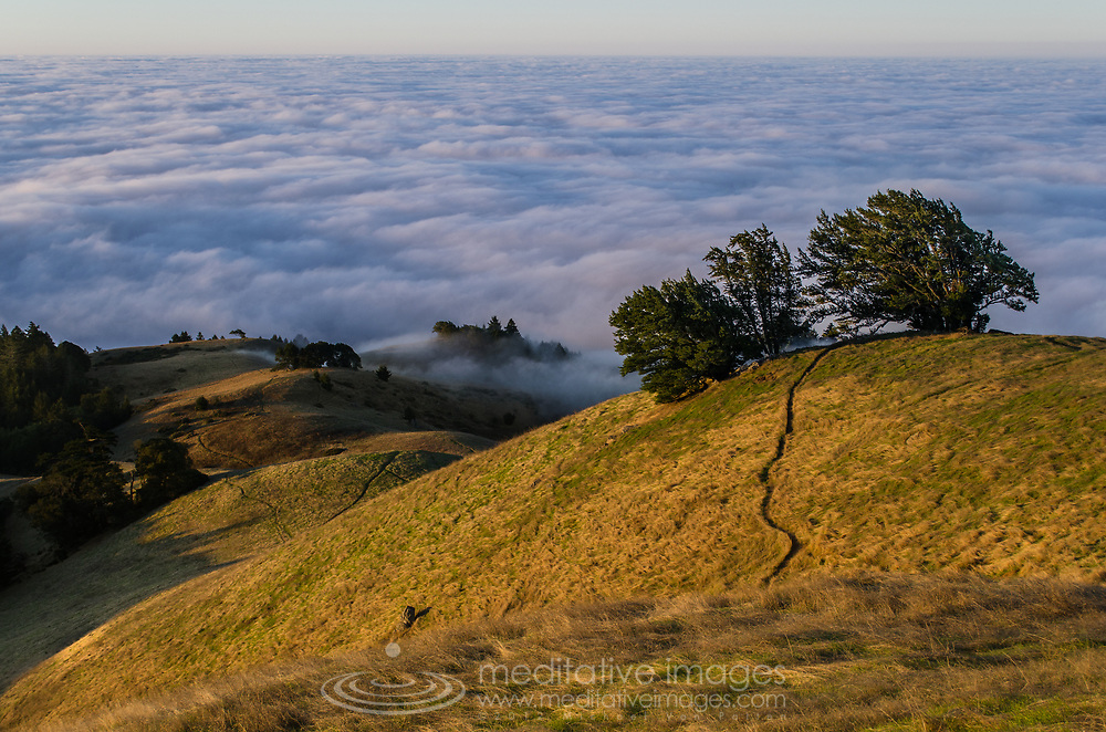 The best shots are always the most unexpected. Despite waking up at 4am to find the city below socked in with fog as usual, I had a feeling it would still be worth it. The drive up to Mount Tamalpais State Park usually take about an hour but the fog this morning was spectacularly thick. The never ending winding roads and the ever present deer leaping around made the drive almost 2 hours. Finally arriving at the gate around 6:30 AM, only to find that the park doesn't officially open until 7 am. The exact time the sun is expected to rise...Ooops!<br /> <br /> Once the ranger finally showed up I was still unsure if the fog would ever clear, but about a quarter mile past the gate I found my head finally rising above the clouds...Hallelujah!!! Thankfully I had my spot already in mind, so I was off like a shot...to get my shots.