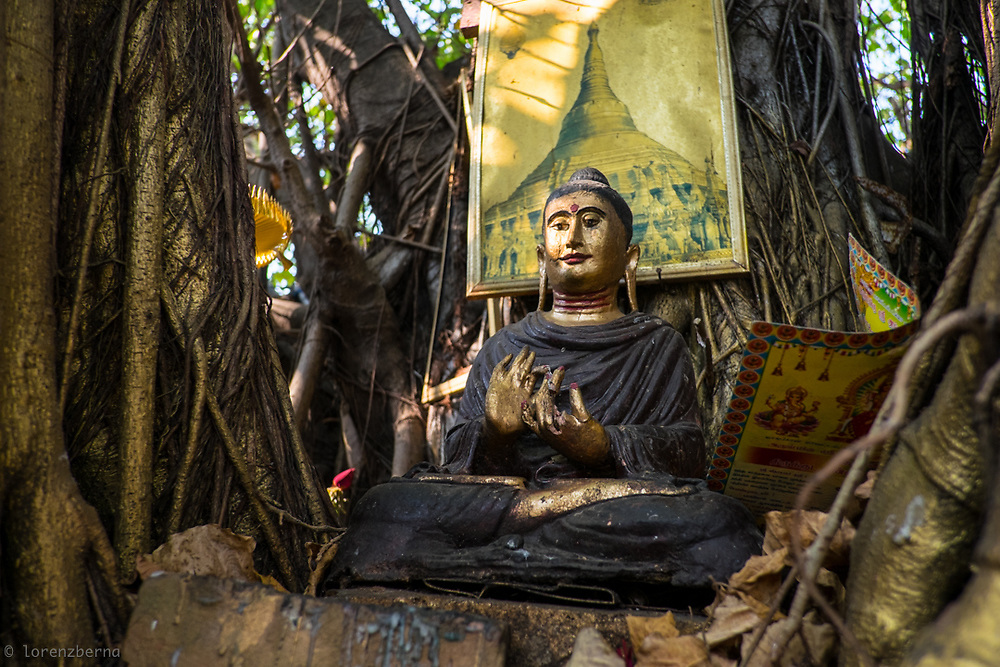 Yangon, Myanmar. A Buddha statue nestled in the trunk of a banyan tree. Myanmar is the Buddhist country who have the higher proportion of monks in the population and that spent the higher part of income on religion.<br />
