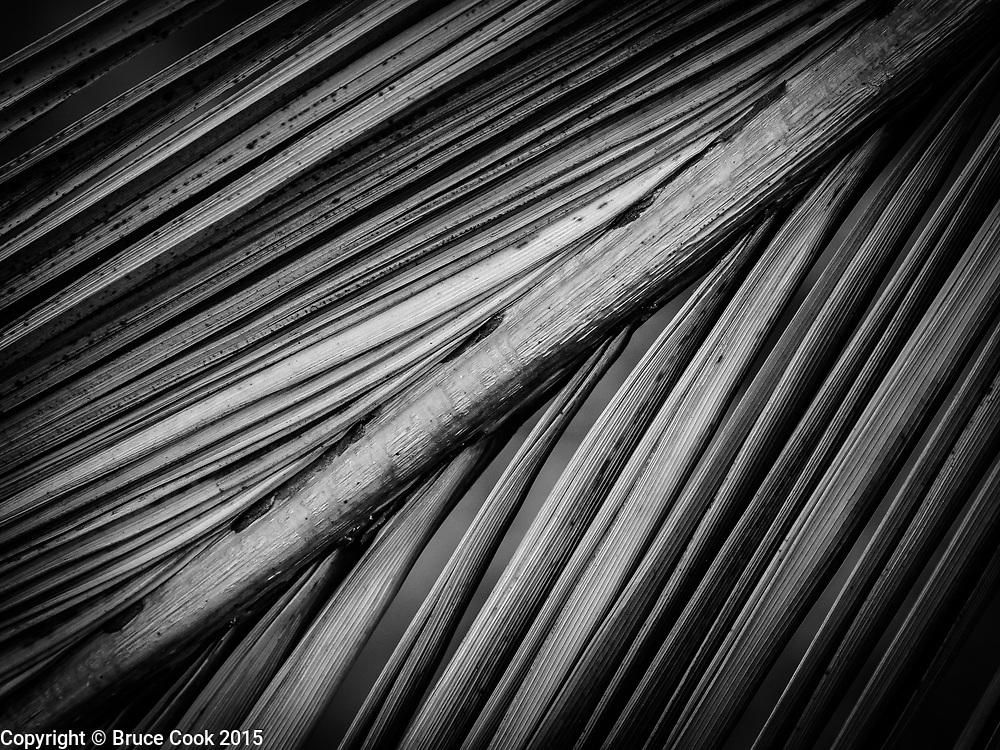 Palm leaf B&W