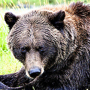 8.18.13 Alasksa Wildlife Preserve