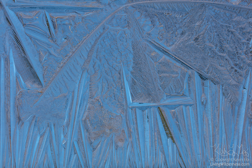 A thin layer of ice forms on a small pond in Lynnwood, Washington, forming rugged patterns.