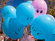 23 JANUARY 2011 - PHOENIX, AZ:  Balloons with a pro-life message are inflated before the March for Life through Phoenix, AZ, Sunday. About 500 people participated in the pro-life march and rally, which marked the 38th anniversary of the US Supreme Court's Roe vs. Wade decision, which legalized abortion in the United States.  PHOTO BY JACK KURTZ