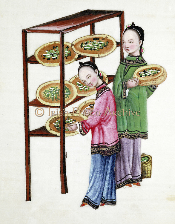 Women feeding silkworms on mulberry leaves: Chinese tempera painting on rice paper (19th century)