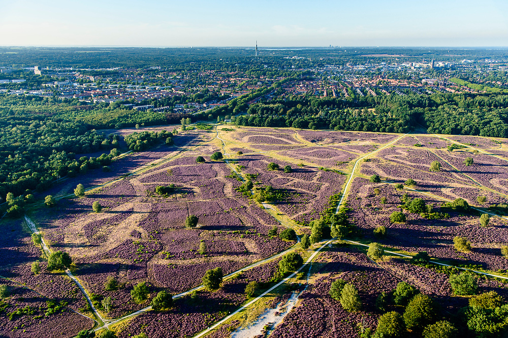 Nederland, Noord-Holland, Hilversum, 23-08-2016; natuurgebied Hoorneboegsche Heide (Hoorneboegse Heide) in bloei, gezien naar Hilversum.<br /> Hoorneboegse Heather in bloom, Hilversum at the horizon.<br /> <br /> aerial photo (additional fee required); <br /> luchtfoto (toeslag op standard tarieven);<br /> copyright foto/photo Siebe Swart