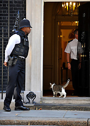 © licensed to London News Pictures. LONDON, UK.  09/08/11.Larry, the Downing Street Cat. Mandatory Credit Stephen Simpson/LNP