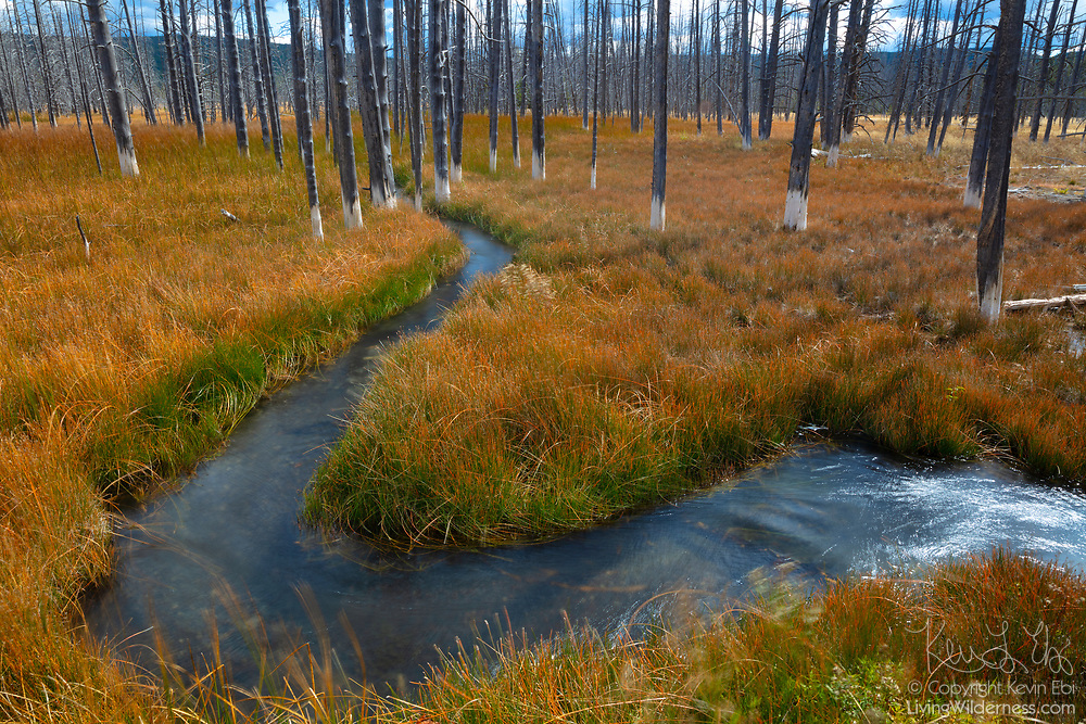 Tangled Creek in Yellowstone National Park, Wyoming, curves through a patch of dead lodgepole pine trees that have a silica crust at their base, resembling bobby socks. The trees are in the Black Sand Basin of Yellowstone, a geothermal area. When the hot spring runoff shifted, the trees absorbed the silica-rich water.