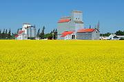 Grain elevators and canola<br /> Cypress River<br /> Manitoba<br /> Canada
