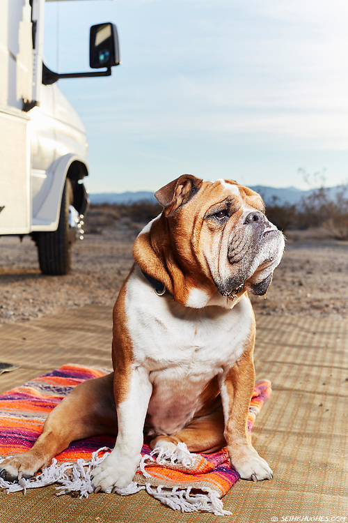 """""""Buddha"""" sits outside and guards his motorhome while desert camping in Anza Borrego, California."""