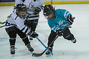 KELOWNA, CANADA - MARCH 04:  Mini Minor Game at the Kelowna Rockets game on March 04, 2017 at Prospera Place in Kelowna, British Columbia, Canada.  (Photo By Cindy Rogers/Nyasa Photography,  *** Local Caption ***