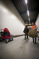 Domino horses of Jos Verlooy (BEL)<br /> Departure of the horses to the World Cup Finals in Las Vegas from Schiphol - Amsterdam 2015.<br />  © Hippo Foto - Dirk Caremans