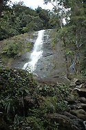 El Yunque National Forest, Puerto Rico, 2006
