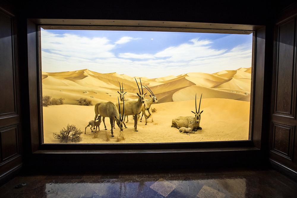 Diarama at the Natural History Museum of Los Angeles County