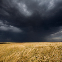 Africa, Kenya, Masai Mara Game Reserve, Sun shines through storm clouds above tall grass on savanna at start of rainy season