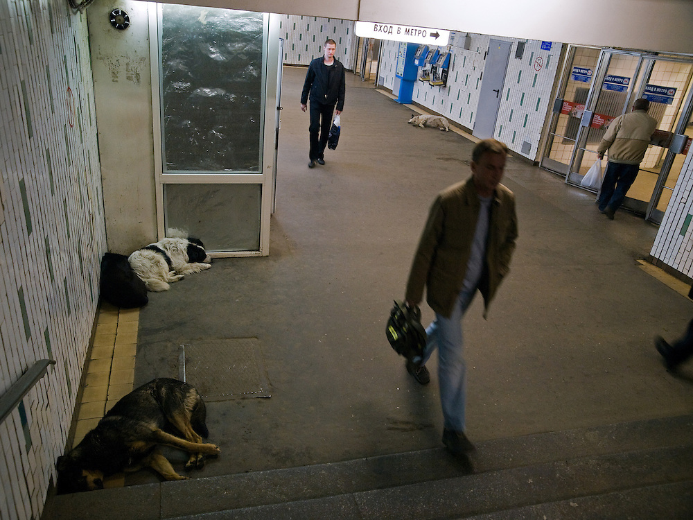 Moskau/Russische Foederation, RUS, 08.05.2008: Obdachlose Hunde in einer Metrostation in Moskau.<br /> <br /> Moscow/Russian Federation, RUS, 08.05.2008: Homeless dogs living in a Moscow metro station.