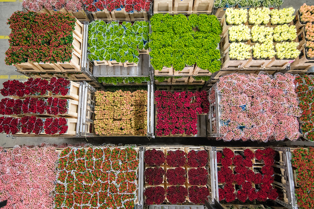 A cart full of various varieties of roses at the worlds largest flower auction, Royal Flora Holland. Amsterdam, Netherlands