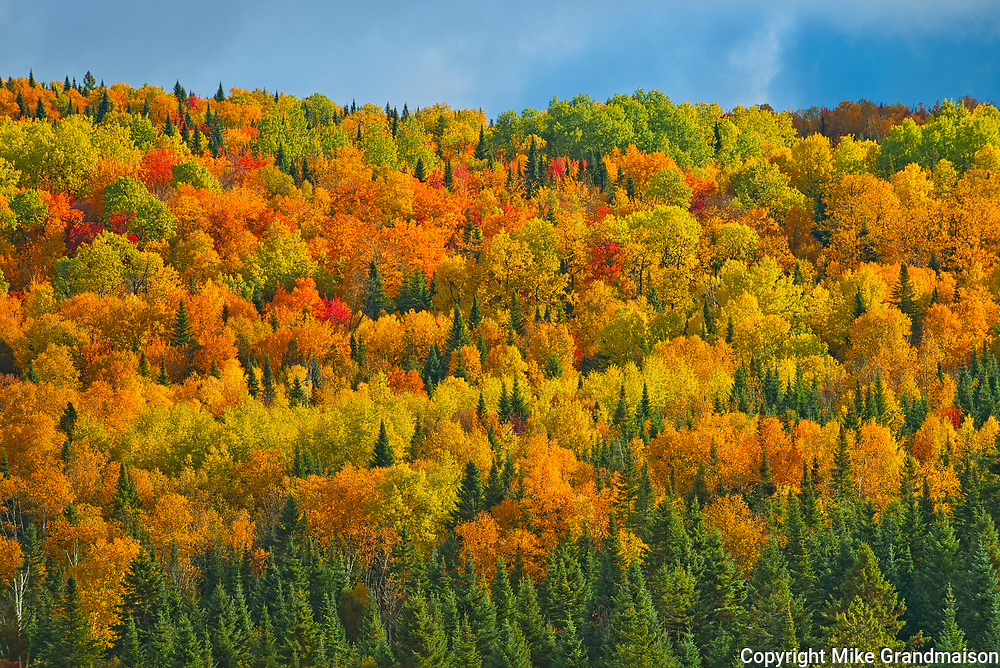 Acadian forest in autumn foliage. Near Edmunston. Madawaska County, Rolling hills. <br />