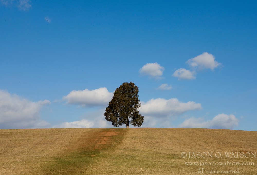 A lone evergreen tree sits on top a hill at Manassas National Battlefield Park, located north of Manassas, Virginia on February 28, 2008.