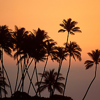 Sunset along the South Kohala coast of the Big Island of Hawaii fronting the Orchid at Mauna Lani, Sunseting behind silhouette of palms on coastline