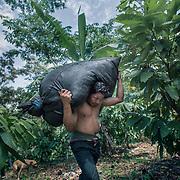 Pepe Guerrera 35, trasporta sulle spalle una &quot;arroba&quot; contenente circa 30 Kg di foglie fresche. Le foglie una volta essicate verranno vendute per 10 Soles/1 Kg.<br /> <br /> Pepe Guerrera 35, carries a &quot;arroba&quot; containing about 30 kg of fresh leaves. The leaves when dried will be sold for 10 Soles / 1 Kg.