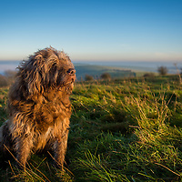 Dogs at Ditchling Beacon