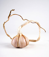 Garlic on white background - studio shot