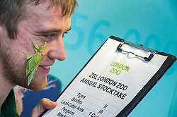 © Licensed to London News Pictures. 03/01/2013 London, UK. Keeper Jeff Lambert with a Leaf Insect at the annual stocktake of every animal at London Zoo, Regents Park, London. The compulsory count is required as part of the zoo's licence and every creature, great or small will be accounted for..Photo credit : Simon Jacobs/LNP