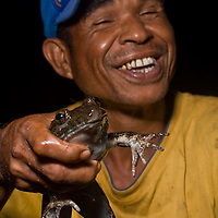 A man catches an undescribed species of frog from the genus Limnonectes in Mt Tompotika, Central Sulawesi