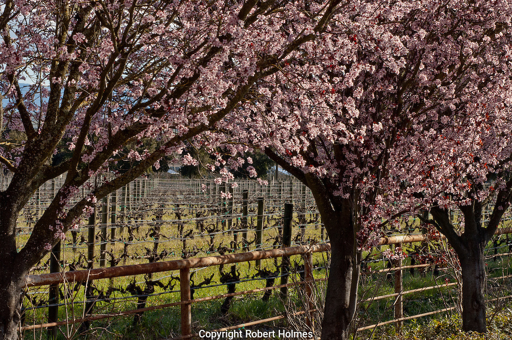 Cline Cellars, Sonoma County, California