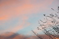 Photo sunset wall art. Topanga Canyon, pink sky, clouds, tree. Matted print, Santa Monica, Westside, Venice, Los Angeles, Southern California photography. Fine art photography limited edition.