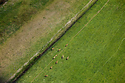 Nederland, Zuid-Holland, Groene Hart, 12-05-2009; Polder Zevenhoven met grazende roodbruine zoogkoeien in het weiland. Grazing reddish brown cattle in a meadow..Swart collectie, luchtfoto (toeslag); Swart Collection, aerial photo (additional fee required).foto Siebe Swart / photo Siebe Swart
