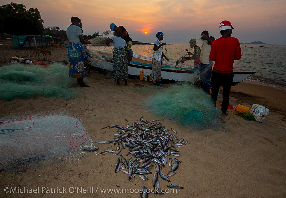 Fishermen sort their catch at sunset on the shores of Likoma Island, Lake Malawi, Malawi. Overfishing is one of the main threats to the endmic fish that live in Lake Malawi.