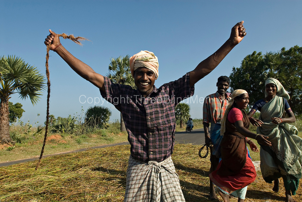 Placing rice stalks out to dry on the road after threshing. The rice harvest in South East India.