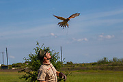 Kevin Gaines, Sky King Falconry, falconry,