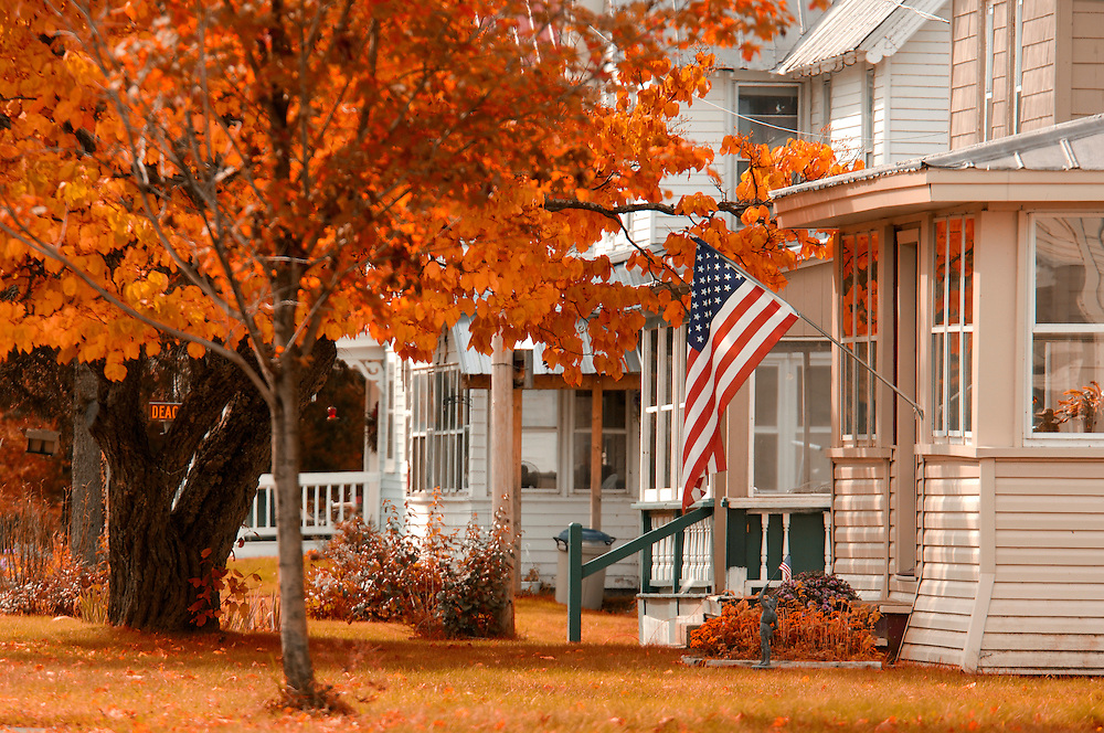 Fall colored Tree, American Flag, Wells, Adirondack Mountains, New York, United States of America