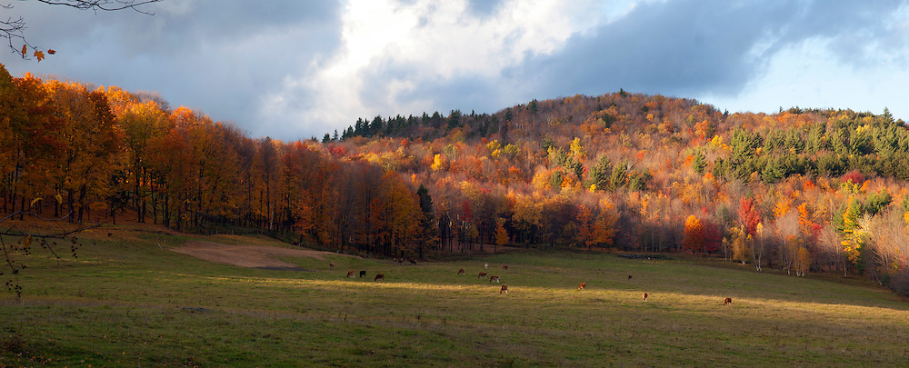 Pasture field with cows in the fall