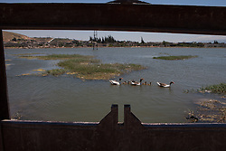 Syria.<br /> Ducks pass by a door of the canal that end up in a small lake in the town of Al-Qala, Syria,<br /> 15th June 2013<br /> Picture by Daniel Leal-Olivas / i-Images