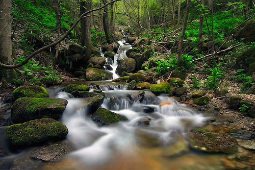 Stream In The Woods Stock Footage Video 928831 - Shutterstock