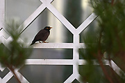 Ashgabat, Turkmenistan - 2017 September 22: Bird rests on the fence of Ashgabat Olympic Complex while 2017 Ashgabat 5th Asian Indoor &amp; Martial Arts Games on September 22, 2017 in Ashgabat, Turkmenistan.<br /> <br /> Mandatory credit:<br /> Photo by &copy; Adam Nurkiewicz<br /> <br /> Adam Nurkiewicz declares that he has no rights to the image of people at the photographs of his authorship.<br /> <br /> Picture also available in RAW (NEF) or TIFF format on special request.<br /> <br /> Any editorial, commercial or promotional use requires written permission from the author of image.