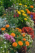 Flowers, Mixed, California Garden