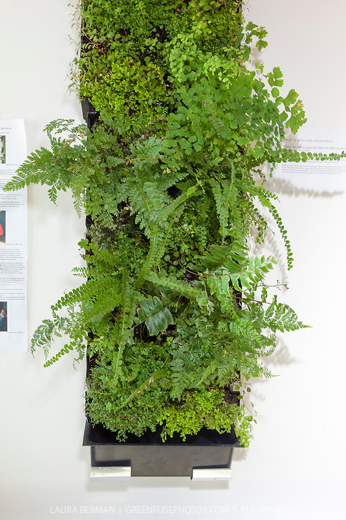 Small indoor Living Walls in an office building.