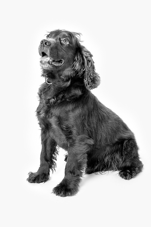 Bob is an Arms Explosive Search dog, Operations: Herrick,  Veterans Portrait Project UK Sennelager Germany