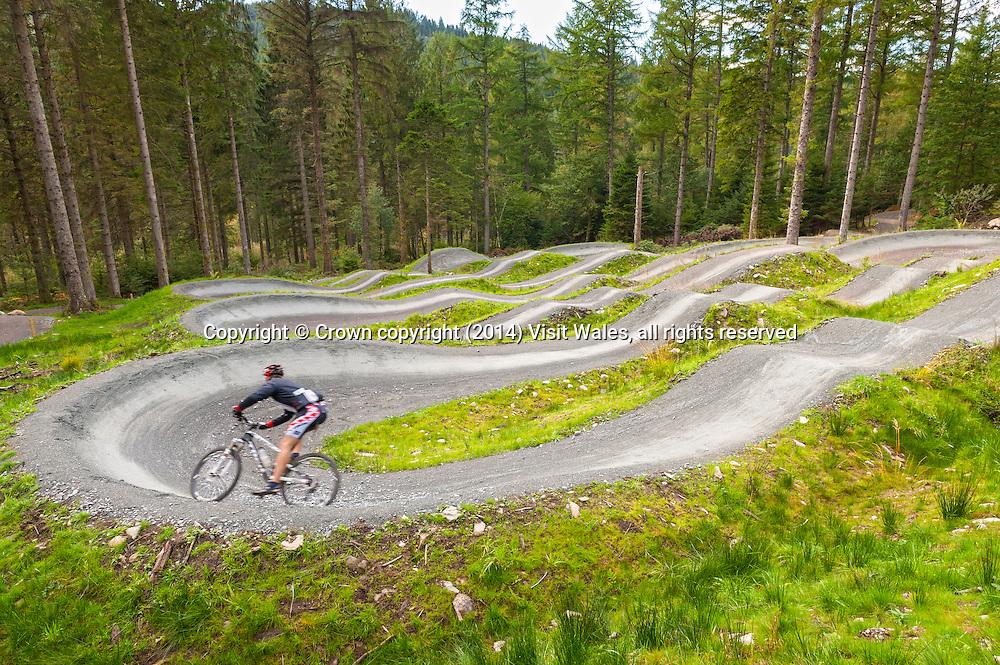 Mountain Biking<br /> Coed y Brenin<br /> Snowdonia<br /> Gwynedd<br /> Mid<br /> Activities and Sports