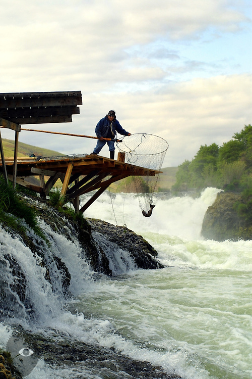 Warm Springs Indian Robert Charley  Sr., greets the sunrise with the catching of a chinook from the Deschutes River near Shearers Falls outside of Maupin, Oregon. Their tribe still practices the age-old the art of dip netting atop wooden platforms which hang precariously above the rushing waters.