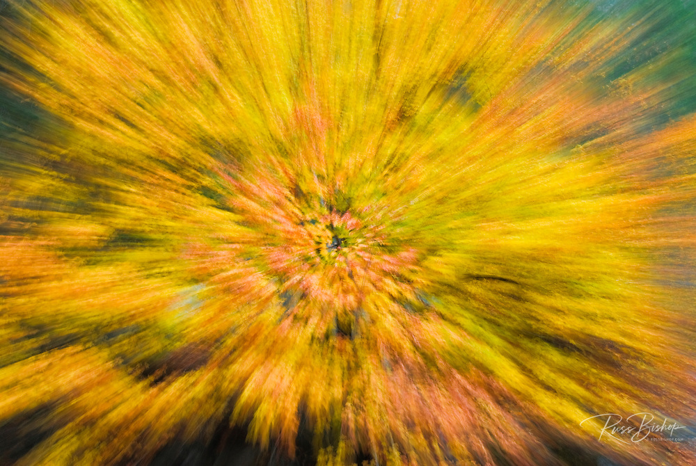 Fall color abstract, Yosemite Valley, Yosemite National Park, California